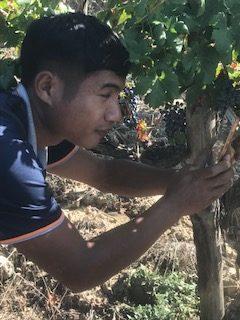 Découverte des vignes italiennes