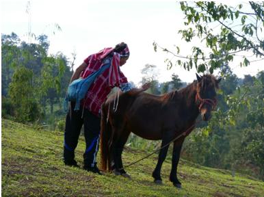 Le cheval de Maepo