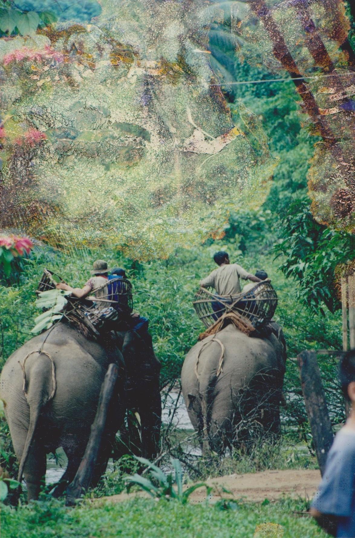 éléphants karens montés