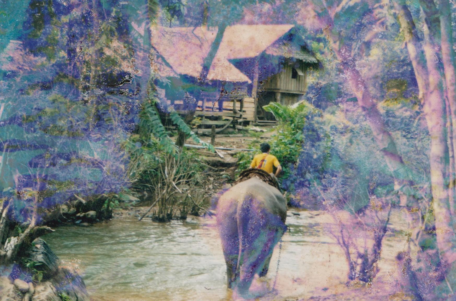 Elephant dans un village