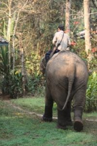 Elephant et son cornac karen